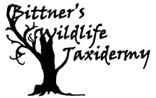 Bitner's Wildlife Taxidermy