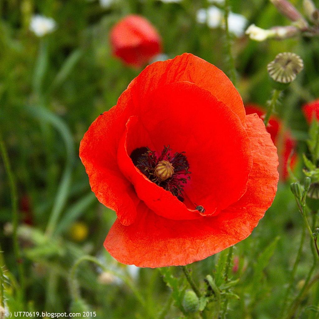 Kraut Ruben Auswarts Blumen Am Wegesrand