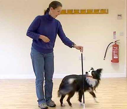 Many Dog Tricks You Should Know Circle to the right