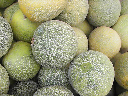 how to tell the difference between gourds and squash