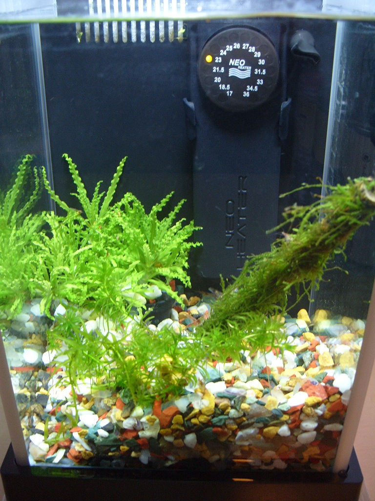 how to get rid of detritus in a shrimp tank