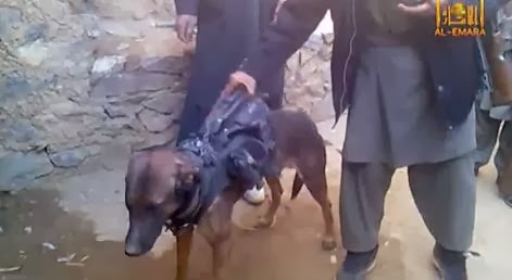 colonel the dog, captured dog, Taliban capture a dog
