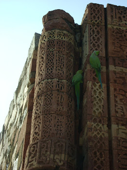parrot love birds at Qutub Minar, Delhi, India