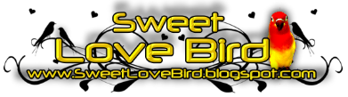 Sweet Love Bird