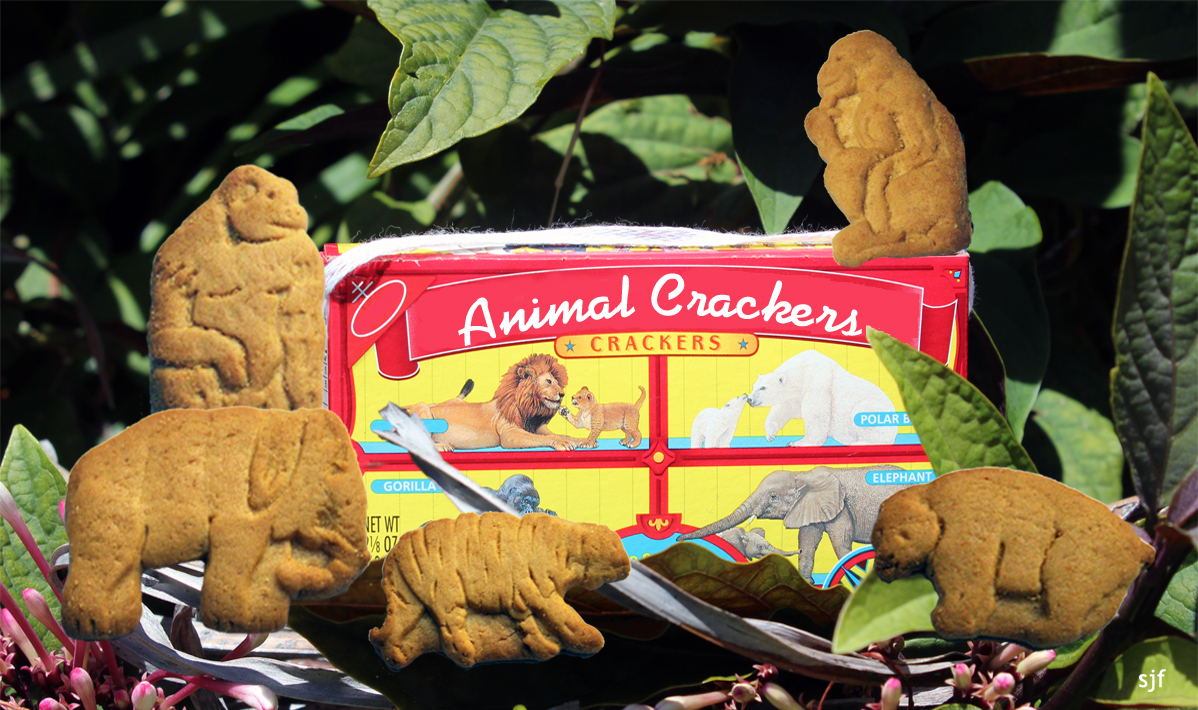 animal crackers are usually in the shape of circus animals such as ...