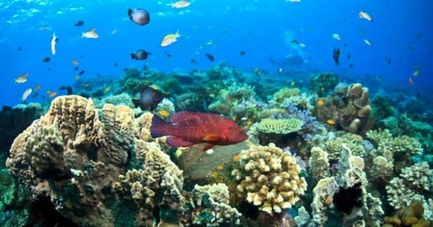 Mengapa Bisa Cuy?: Mengapa Ikan Laut Tidak Asin?