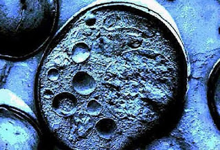 Células tronco embrionárias não dão resultado e matam seres humanos, assinala perita