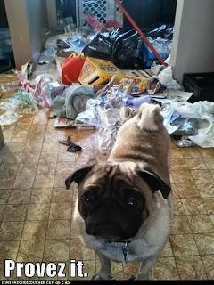 dog shaming, pug shaming, provez it, dog got in trash, crazy dog, pug life