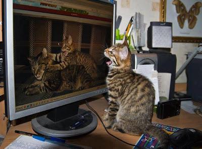 Imágenes de Gatos, funny cats