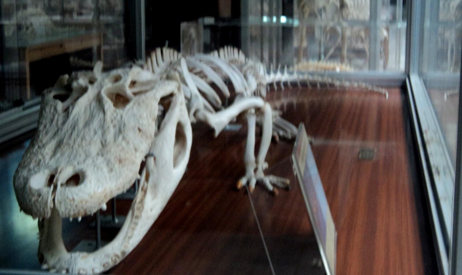 Fotografiemos la ciencia: El cocodrilo común
