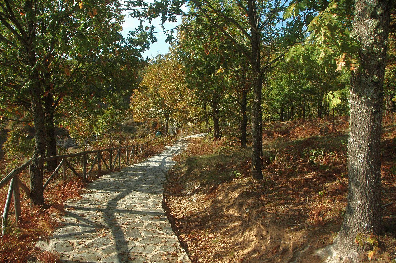 Σας ταξιδεύουμε στα ομορφότερα ελληνικά δάση! (εικόνες)
