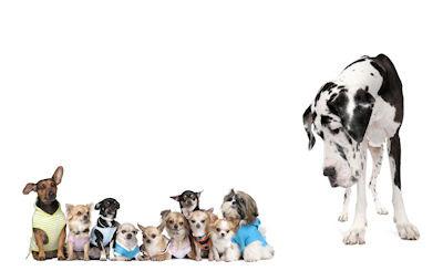 10 cachorros pequeños y un perro enorme - Funny photos