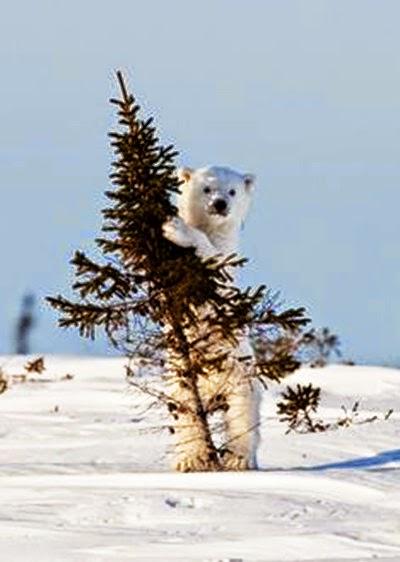 Snowman snow bear
