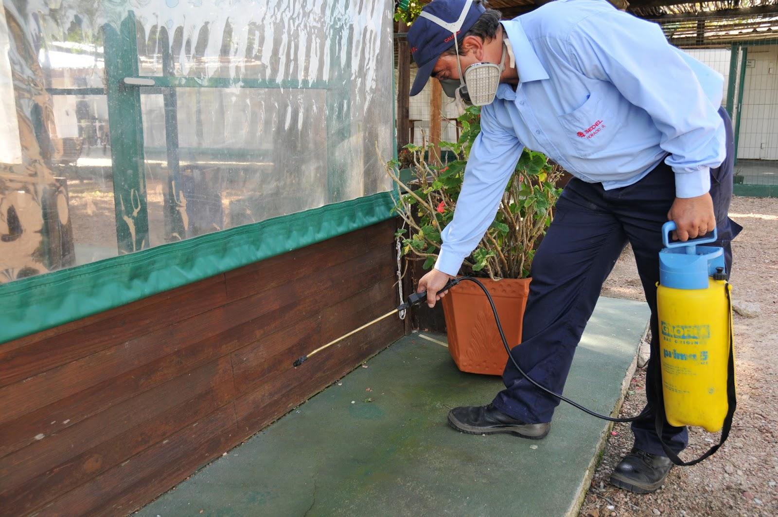 Control de plagas desinfecciones zaragoza 976 903 255 - Exterminar hormigas en casa ...