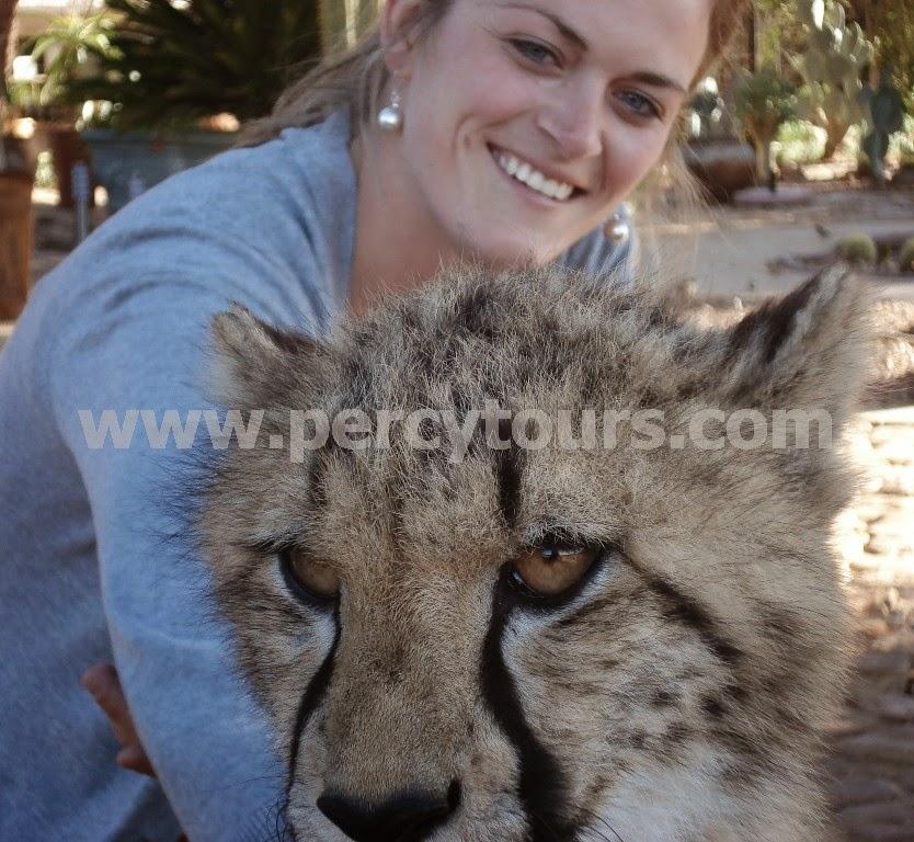 Cheetah on Safari near Hermanus