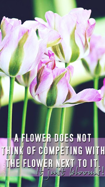 """Tulpenfoto mit Spruch """"a flower does not think of competing with the flower next to it. It just blooms!"""""""