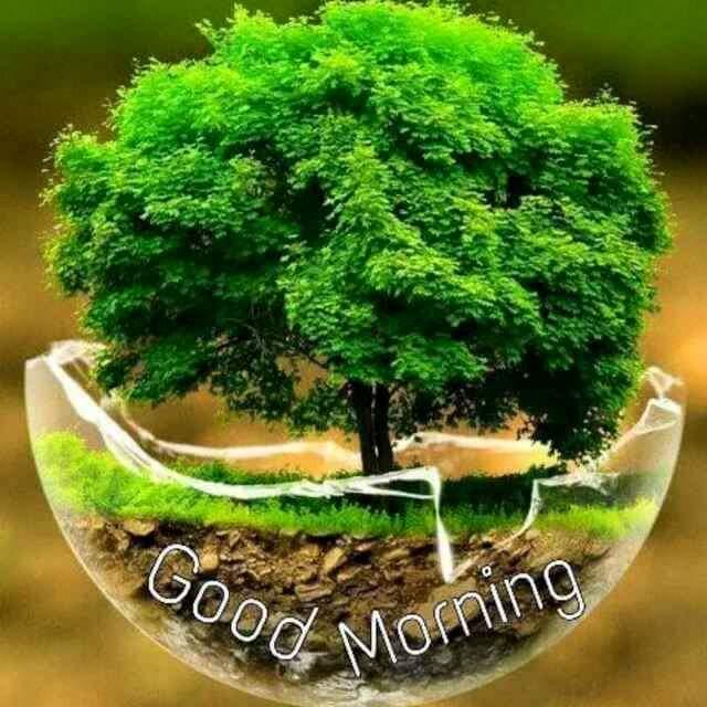 Good Morning Image | Good Morning SMS