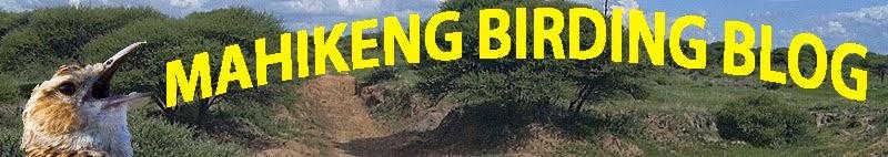 Mahikeng Birding Blog