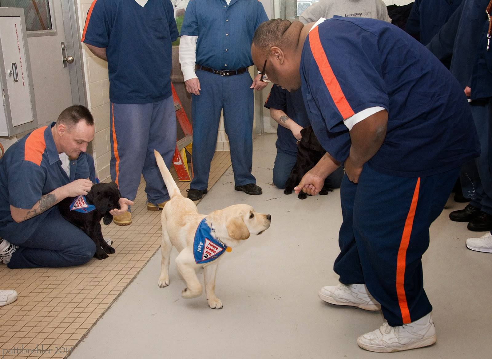 The man on the left is kneeling with a small black lab puppy, he is holding the puppy by the collar and looking down at him. The puppy is sitting between his knees and is wearing a Future Leader Dog blue bandana. The yellow lab puppy is following the african american man's right hand, which is holding a treat. The yellow lab, also wearing a Future Leader Dog blue bandana, is reaching toward the man's hand. The man is backing up away from the black lab puppy. There are several men forming a circle around the two men and pups.