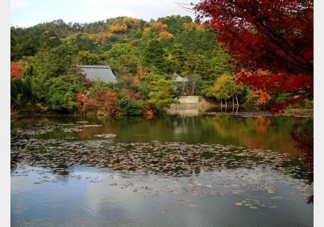 أجمل 10 حدائق فى العالم .. 68238-1362404006.jpg