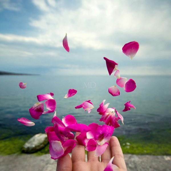 rose petal pic