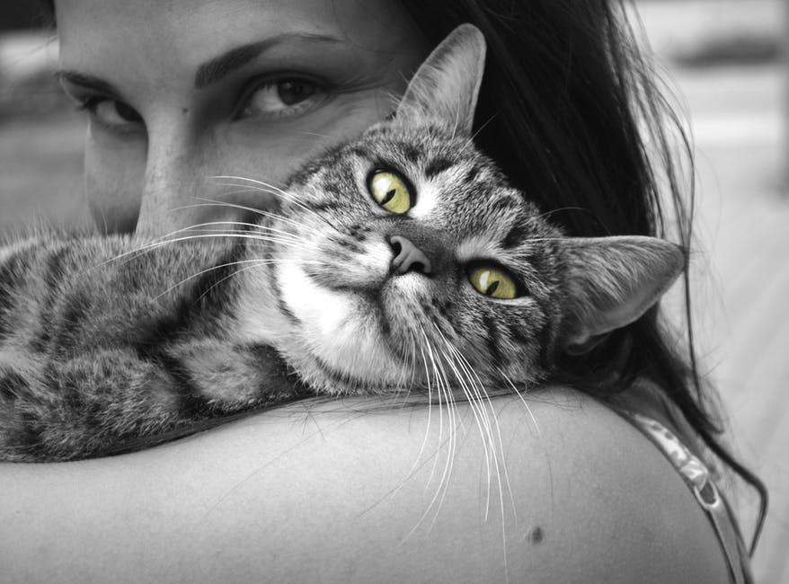 Rúbrica: Os Meus Gatos