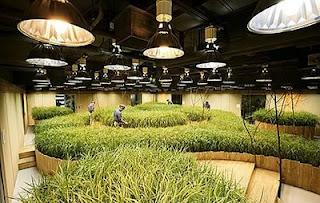 subterranean farming japan