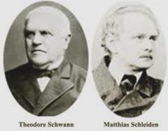 Schleiden e Schwann são os criadores da Teoria Celular