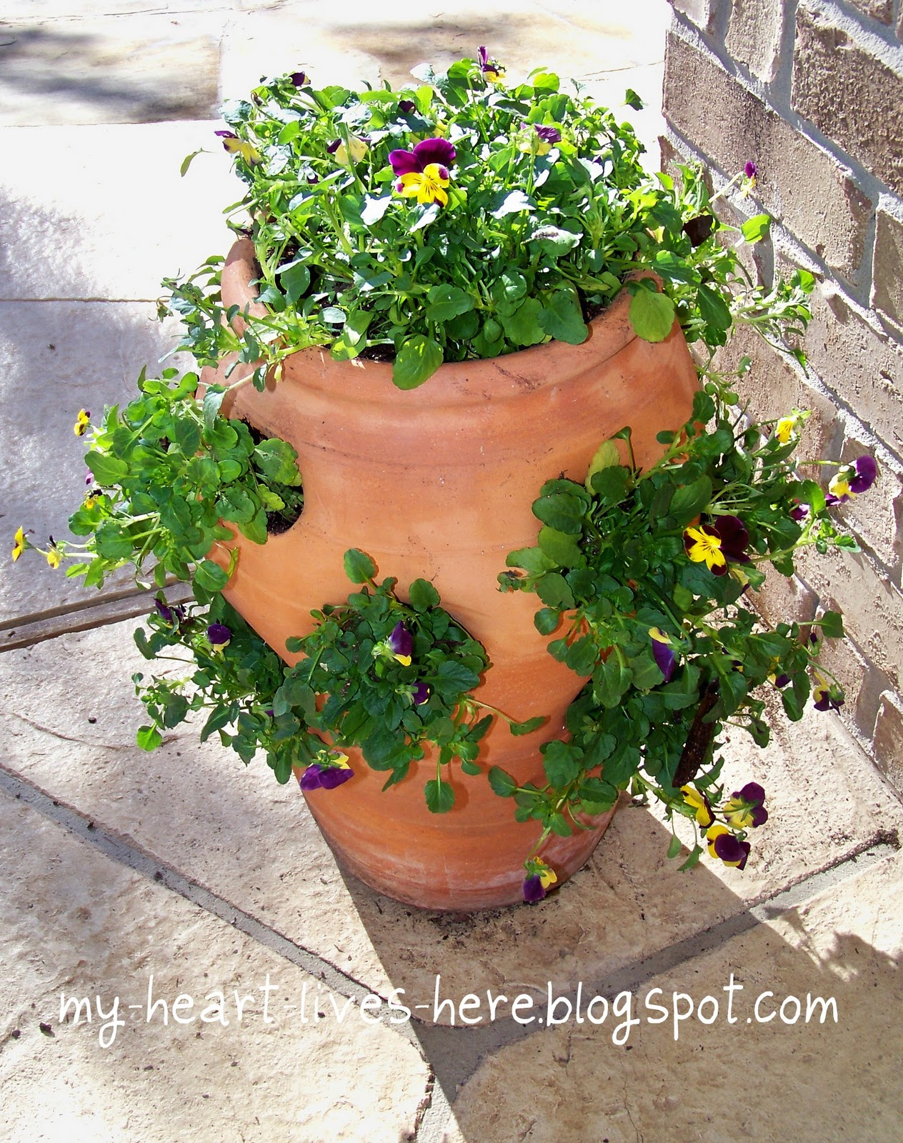 using an old strawberry pot