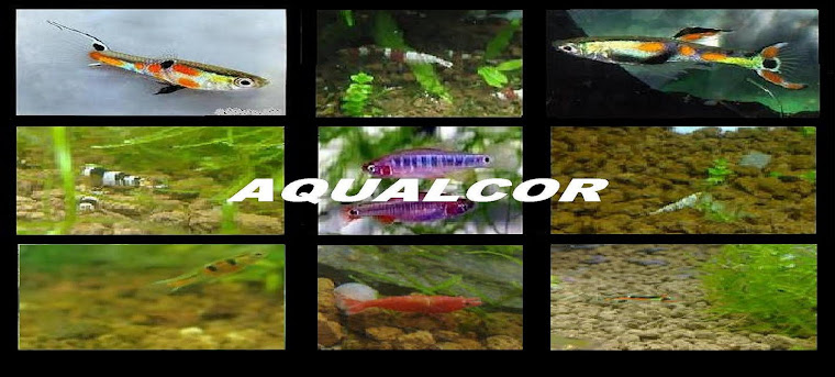 AQUALCOR