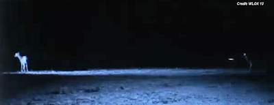 UFOs Caught on Trail Cam (3) - Jackson County, Mississippi 2-16-14
