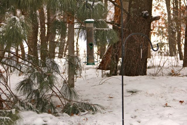 "March 24: 25"" gap between feeder and snow bank"