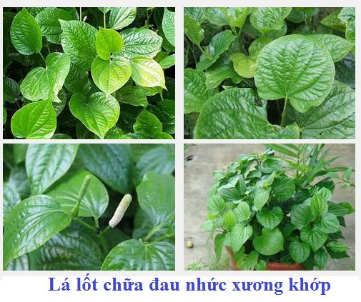 chua-dau-nhuc-xuong-khop-bang-la-lot-www.c10mt.com
