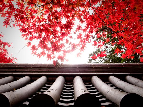 Saimyou-ji Temple, Kyoto