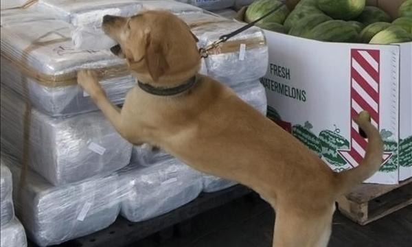 perros de busqueda de sustancias