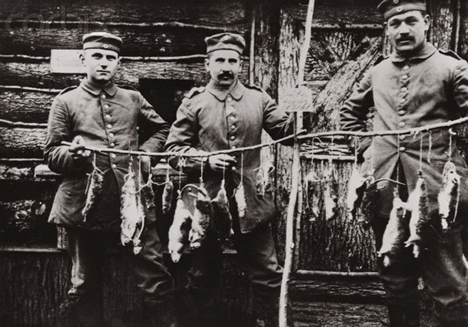 Trenches in Ww1 Rats Rats From The German Trenches