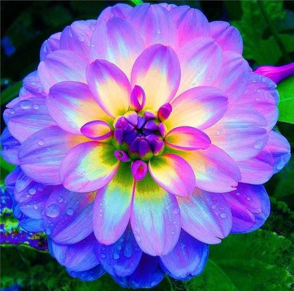 bellas flores para compartir en facebook y redes sociales