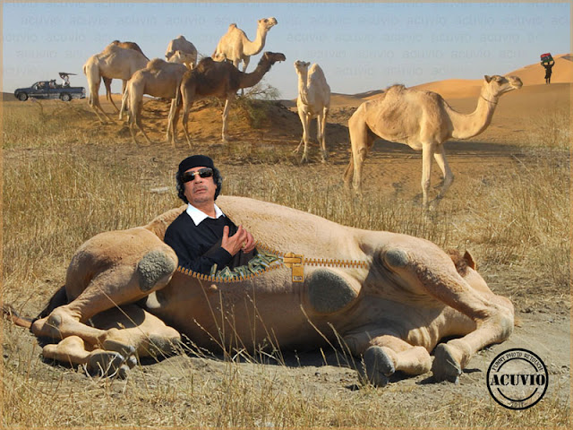 Funny photo Muammar Gaddafi Chestionar
