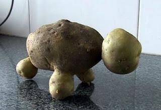 مزارع صينى يكتشف ثمرة بطاطس على شكل سلحفاة ~ سبحان الله