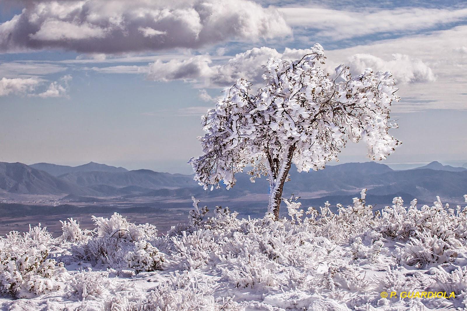 Nieve helada en el Carche, Jumilla