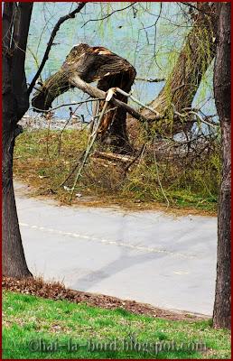 plecaciune copac tineretului