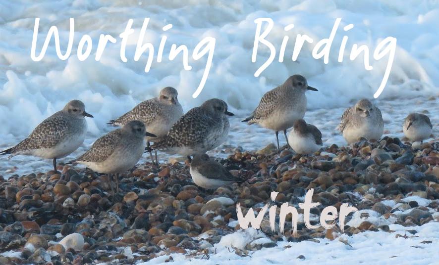 Worthing Birding and Wildlife