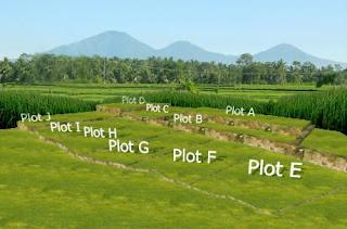 Hal-hal Yang Harus Diperhatikan Dalam Investasi Tanah Kavling
