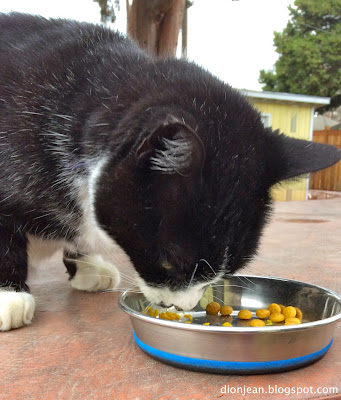 Jasper the cat eating a lunch with kibble and pumpkin