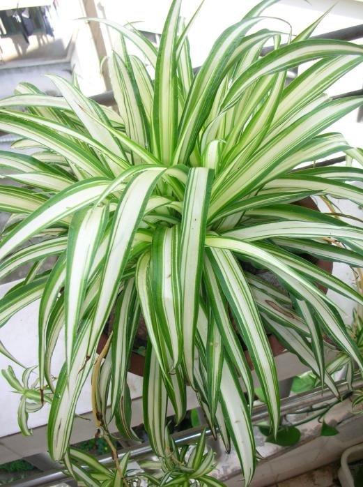 BAGVANI TIPS FOR GARDENING: Indoor Plants
