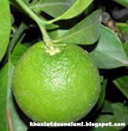 khasiat dan manfaat jeruk keprot