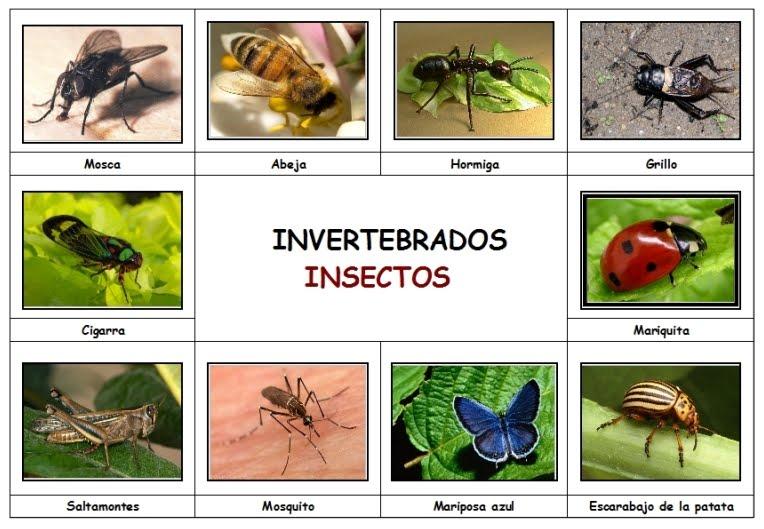 imagenes de animales insectos - Top 20» de los animales más raros del Planeta ABC es