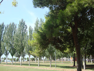 Sant carles de la rápita beautiful trees Photo - Tarragona - Spain