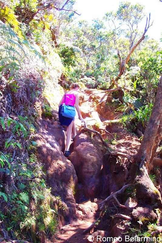 Pihea Trail Kauai Hawaii