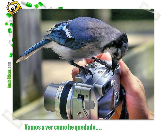 Chiste de Pájaro en una Cámara de Fotos